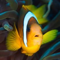 Nemo #2
