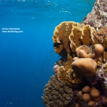 Saint John's Reef #2