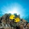 Морские бобочки #2.