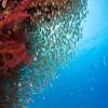 Glassfish.