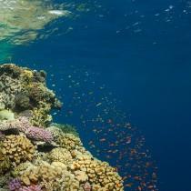 Saint John's Reef #3
