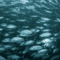 Jackfish wall