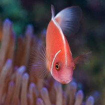 Just Nemo.