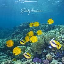 Red Sea Aquarium #2