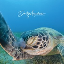 Facepalm ‍- Green Sea Turtle
