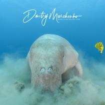 Dugong – Underwater Vacuum Cleaner