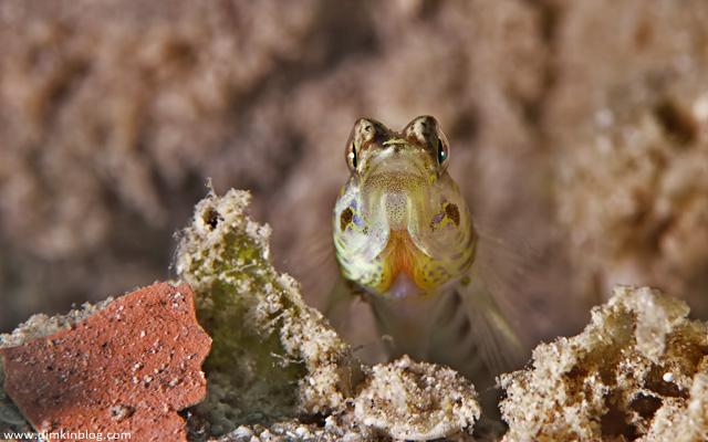 Рыба красноморская