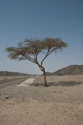 Пустыня дерево