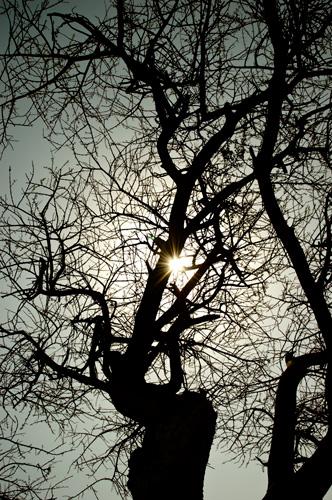 дерево , солнце , пустыня